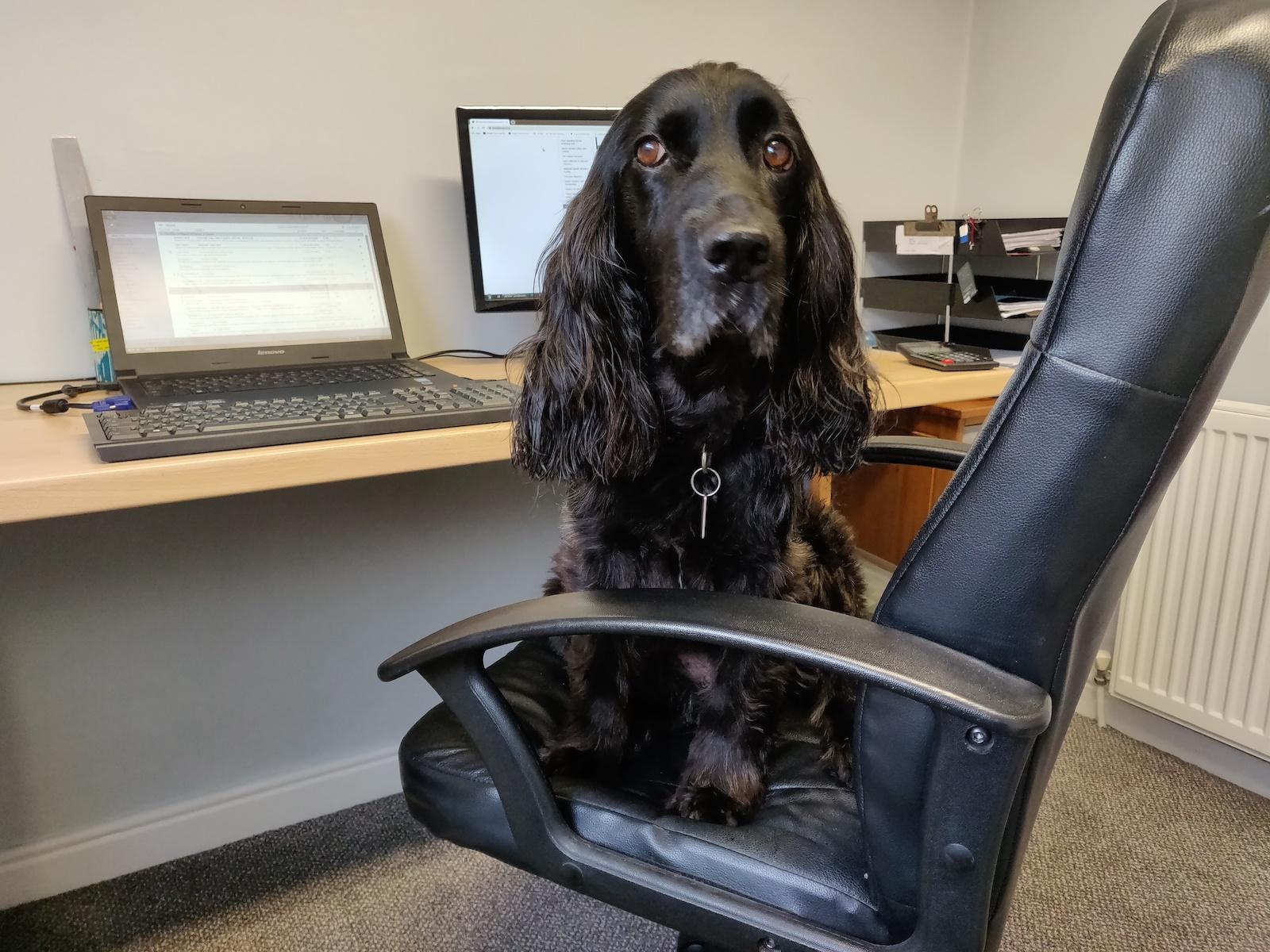 Juno, Office Dog at Kendal Tools & Machinery